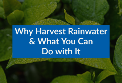 Why harvest rainwater and what you can do with it