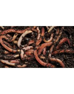 Worm Card Voucher Redemption - Tiger Worms for Wormery